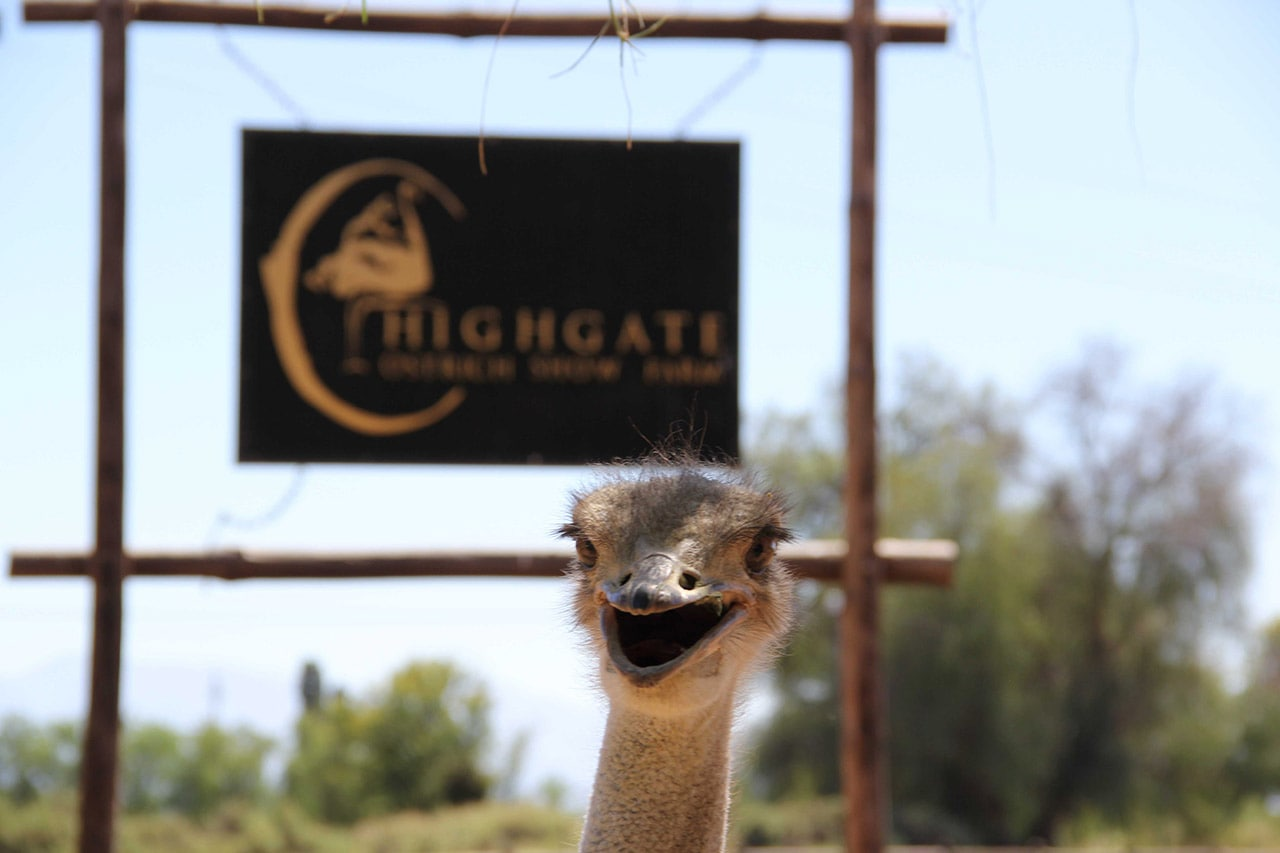Ostrich-farm-tours-highgate6